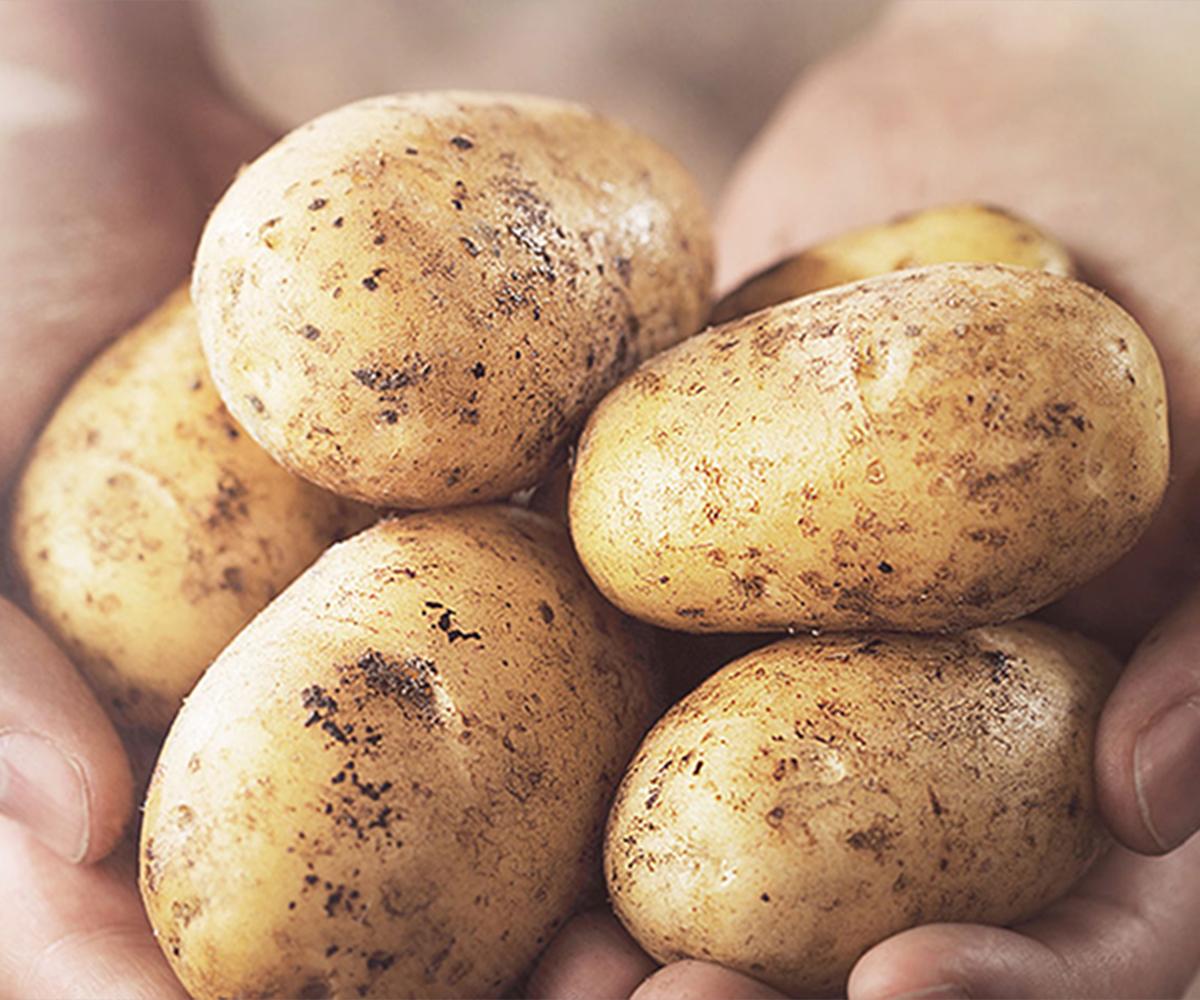 イメージ写真:米国ポテト協会について